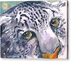 Snow Leopard Acrylic Print by Mary Armstrong