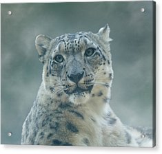 Acrylic Print featuring the photograph Snow Leopard Portrait by Sandy Keeton