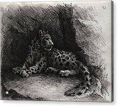 Snow Leopard Acrylic Print by Rachel Christine Nowicki