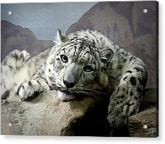 Snow Leopard Relaxing Digital Art Acrylic Print by Ernie Echols