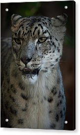 Acrylic Print featuring the photograph Snow Leopard by Roger Mullenhour