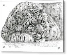 Snow Leopard Acrylic Print by Svetlana Ledneva-Schukina