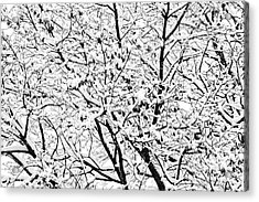 Acrylic Print featuring the photograph Snow On Branches by Lars Lentz
