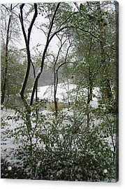Snow On Spring Buds Acrylic Print by Garth Glazier