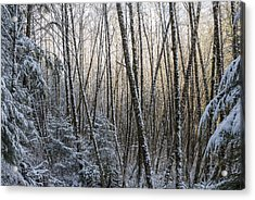 Snow On The Alders Acrylic Print