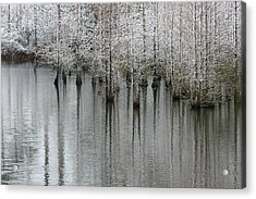 Snow On The Cypresses Acrylic Print by Suzanne Gaff