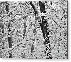 Snow On The Trees In Black And White Acrylic Print