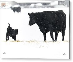 Snow Play Acrylic Print by Mike Dawson