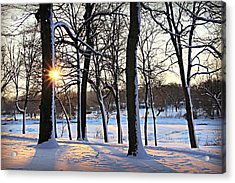 Snow Starred Grove Acrylic Print
