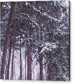 Snow Storm On Pines Acrylic Print