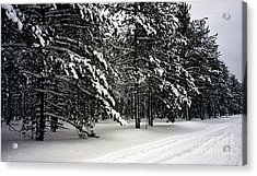 Snow Trail Acrylic Print by Cathy Weaver