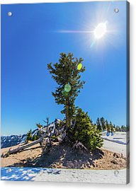 Acrylic Print featuring the photograph Snow Tree by Jonny D