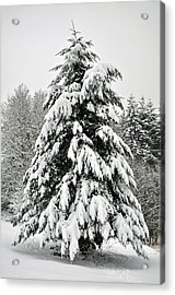 Snow Tree Acrylic Print by Matthew Adair