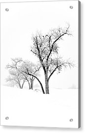 Snow Trees IIi Acrylic Print by Glennis Siverson