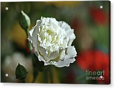 Acrylic Print featuring the photograph Snow White by Stephen Mitchell