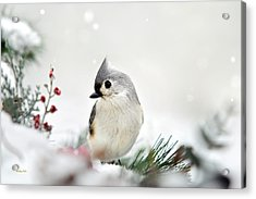 Acrylic Print featuring the photograph Snow White Tufted Titmouse by Christina Rollo