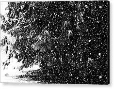 Acrylic Print featuring the photograph Snow by Yulia Kazansky