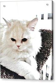 Snowball Is 92 Year Old Widows Cat Acrylic Print by Marsha Heiken