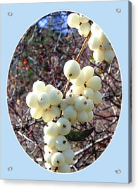 Acrylic Print featuring the photograph Snowberry Cluster by Will Borden