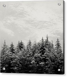 Snowcapped Firs Acrylic Print by Dave Bowman