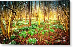 Snowdrops In The Woods Acrylic Print by Mick Flynn