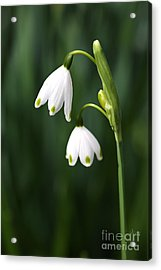 Snowdrops Painted Finger Nails Acrylic Print