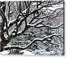 Snowfall And Tree Acrylic Print by Elena Elisseeva