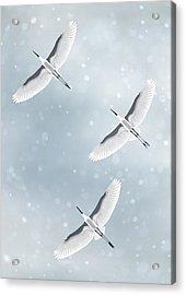 Snowfall Acrylic Print by Moira Risen