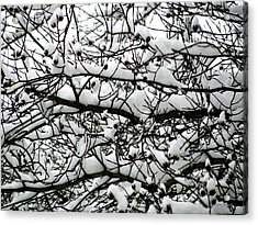 Snowfall On Branches Acrylic Print