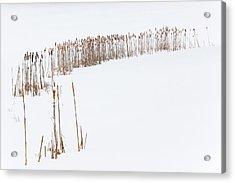 Snowfield 2 - Acrylic Print