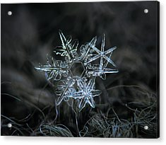 Snowflake Of 19 March 2013 Acrylic Print