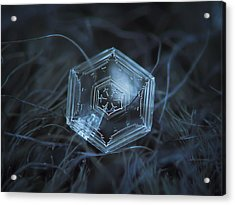 Acrylic Print featuring the photograph Snowflake Photo - Hex Appeal by Alexey Kljatov