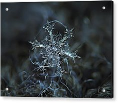 Snowflake Photo - Starlight Acrylic Print
