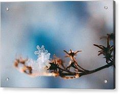 Snowflake Acrylic Print by Tracy  Jade