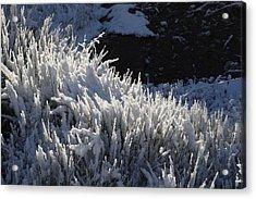 Snowgrass Acrylic Print