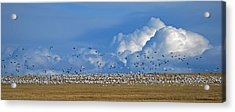 Snows And Storms Acrylic Print
