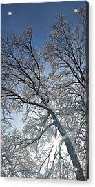 Snowshine Acrylic Print