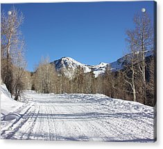 Snowy Aspen Acrylic Print
