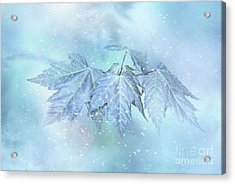 Snowy Baby Leaves Acrylic Print