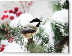 Snowy Chickadee Bird Acrylic Print by Christina Rollo