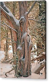 Snowy Dead Tree Acrylic Print by Donna Greene