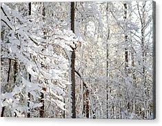 Snowy Dogwood Bloom Acrylic Print