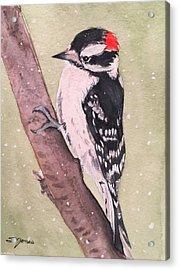 Snowy Downy Acrylic Print