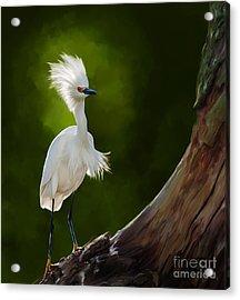 Snowy Egret Artwork 5154 Acrylic Print