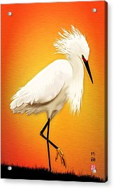 Snowy Egret At Sunset Acrylic Print by John Wills