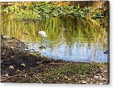 Snowy Egret Reflections Acrylic Print