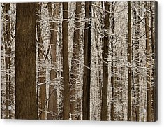 Snowy Forest Elevation Acrylic Print