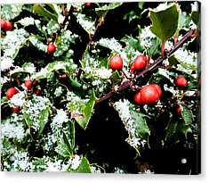 Snowy Holly Acrylic Print