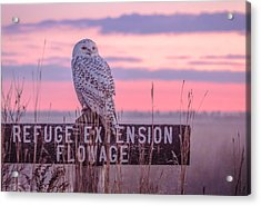 Snowy In The Meadow Acrylic Print