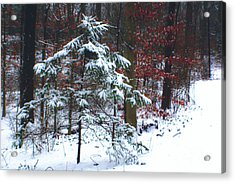 Snowy Little Fir Acrylic Print